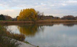 Schilfgürtel am Seehamer See